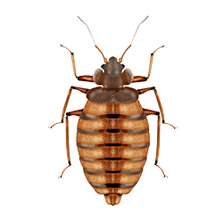 over the counter products for bed bugs