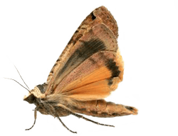 Moth Control Kansas City