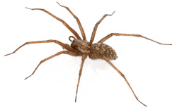 Spider Companies in Kansas City