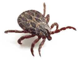 kansas city tick control companies