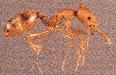 Ant control companies Kansas City