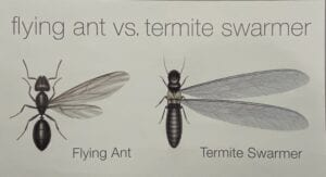 Termite Swarmer vs Ants