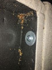 Bedbug evidence in Kansas City
